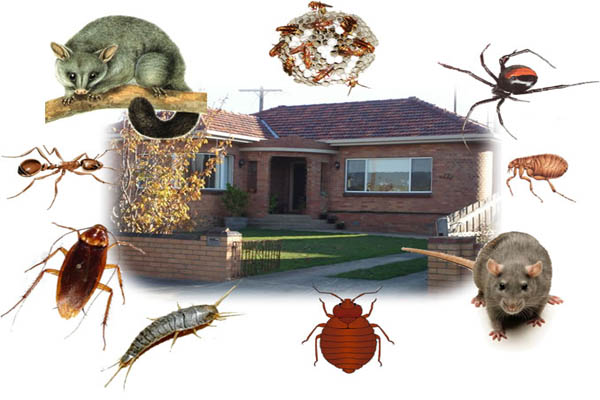 keeping your home free from pests