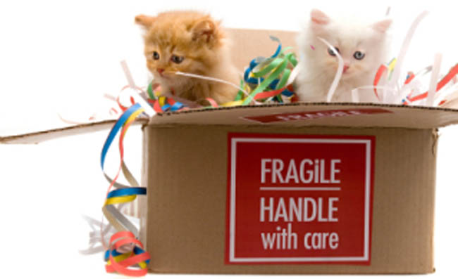 How to Make the Moving With Pets More Secure